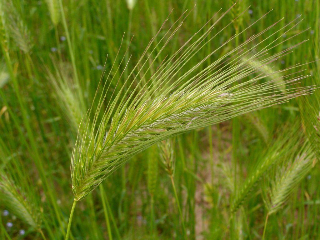 Finanzspritze für Bio-Landwirtschaft