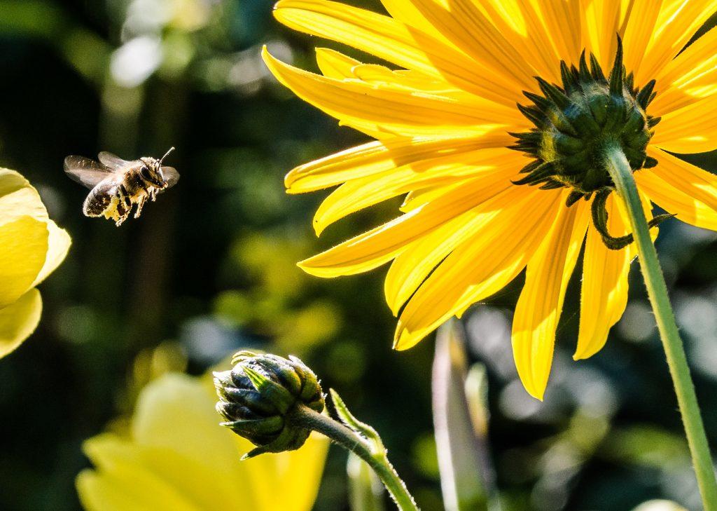 79 Prozent der Deutschen für mehr Insektenschutz