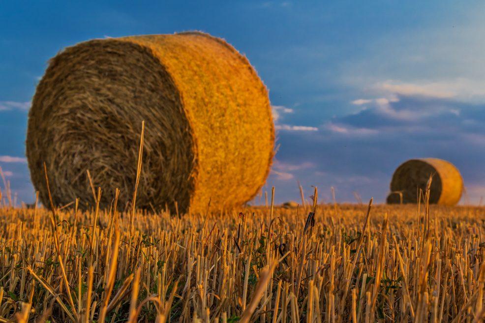 Rekord: Agrar-Haushalt 2020