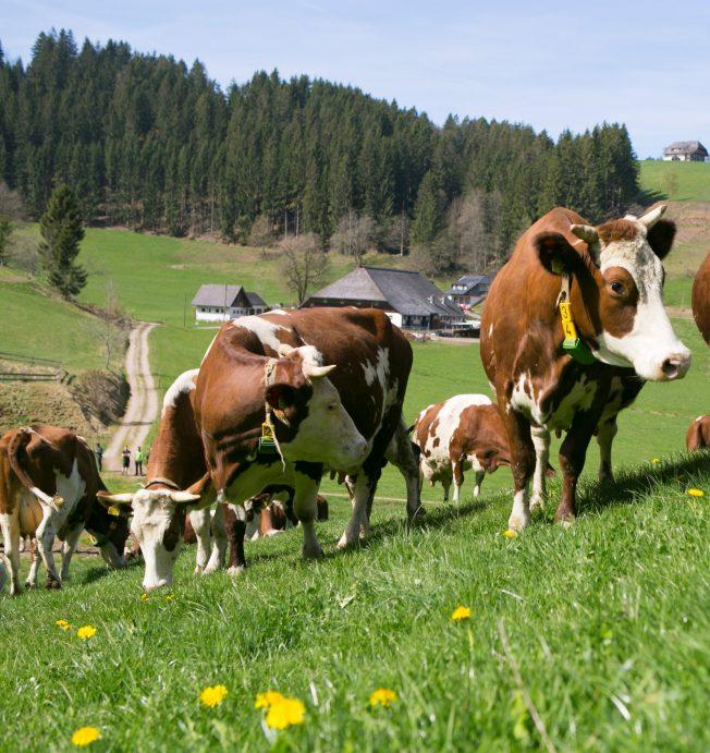 Öko-Landbau wächst auf 1,5 Millionen Hektar