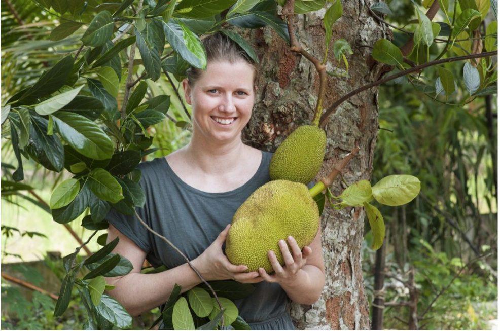 Jackfruit-Trend nach TV-Pleite