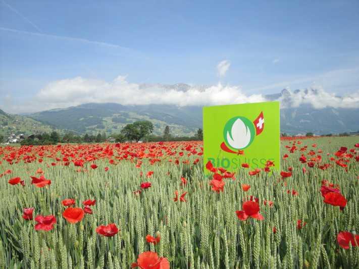 Bio knackt in der Schweiz die zehn Prozent