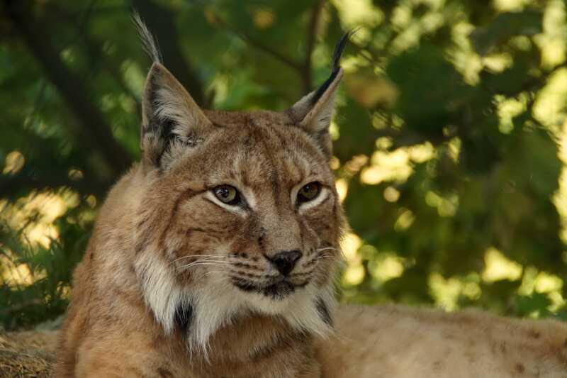 Sante kooperiert mit WWF