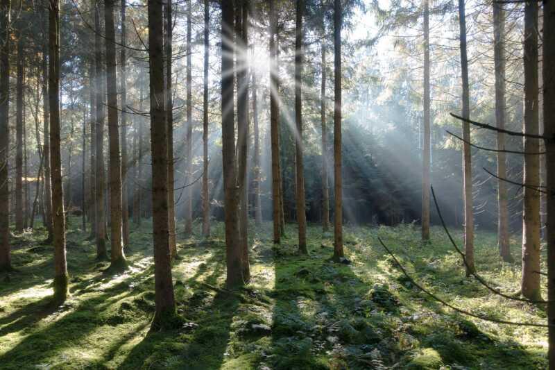 Wald-Wiki geht an den Start