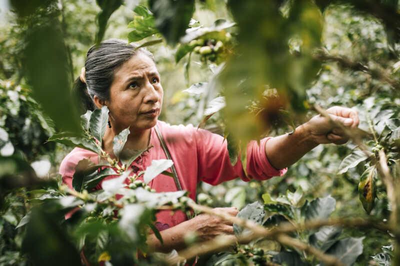 Fairtrade verliert Umsatz